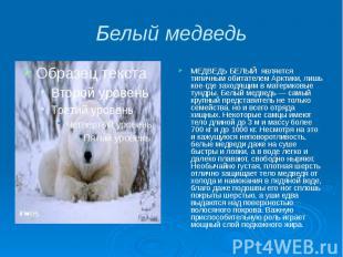 Белый медведь МЕДВЕДЬ БЕЛЫЙ является типичным обитателем Арктики, лишь кое-где з