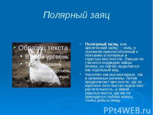 Полярный заяц Поля рный за яц, или арктический за яц — заяц, в основном приспосо