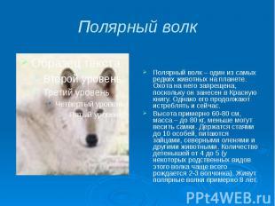 Полярный волк Полярный волк – один из самых редких животных на планете. Охота на