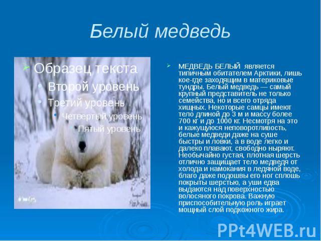 Белый медведь МЕДВЕДЬ БЕЛЫЙ является типичным обитателем Арктики, лишь кое-где заходящим в материковые тундры. Белый медведь — самый крупный представитель не только семейства, но и всего отряда хищных. Некоторые самцы имеют тело длиной до 3 м и масс…