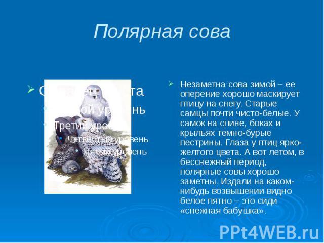 Полярная сова Незаметна сова зимой – ее оперение хорошо маскирует птицу на снегу. Старые самцы почти чисто-белые. У самок на спине, боках и крыльях темно-бурые пестрины. Глаза у птиц ярко-желтого цвета. А вот летом, в бесснежный период, полярные сов…