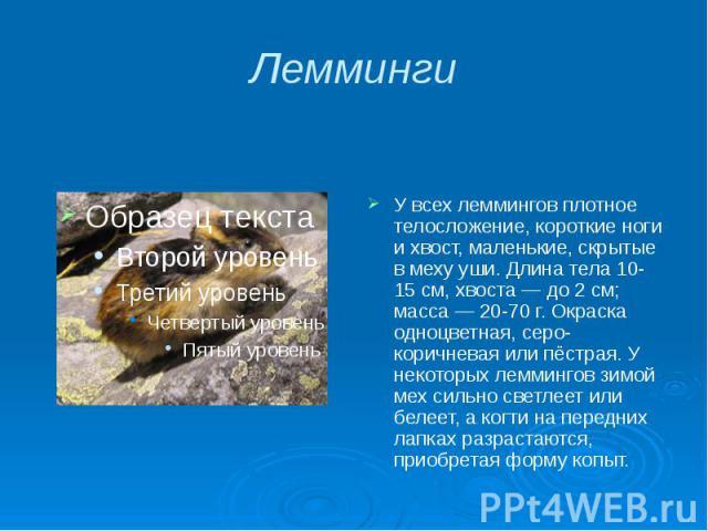 Лемминги У всех леммингов плотное телосложение, короткие ноги и хвост, маленькие, скрытые в меху уши. Длина тела 10-15 см, хвоста — до 2 см; масса — 20-70 г. Окраска одноцветная, серо-коричневая или пёстрая. У некоторых леммингов зимой мех сильно св…