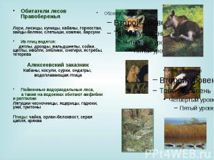 Обитатели лесов Правобережья Обитатели лесов Правобережья Лоси, лисицы, куницы,