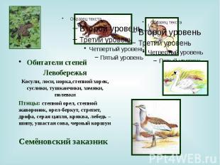 Обитатели степей Обитатели степей Левобережья Косули, лоси, норка,степной хорек,