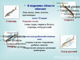 В водоемах области обитают: В водоемах области обитают: Лещ, щука, линь, плотва,