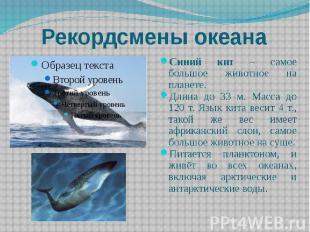 Рекордсмены океана Синий кит – самое большое животное на планете. Длина до 33 м.