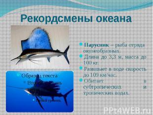 Рекордсмены океана Парусник – рыба отряда окунеобразных. Длина до 3,3 м, масса д