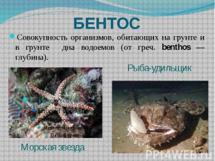 БЕНТОС Совокупность организмов, обитающих на грунте и в грунте дна водоемов (от