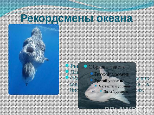 Рекордсмены океана Рыба-луна. Длина до 3 м, масса до 1,4 т. Обитает в теплых морских водах, иногда встречается в Японском и Баренцевом морях.