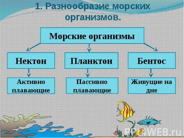 1. Разнообразие морских организмов.