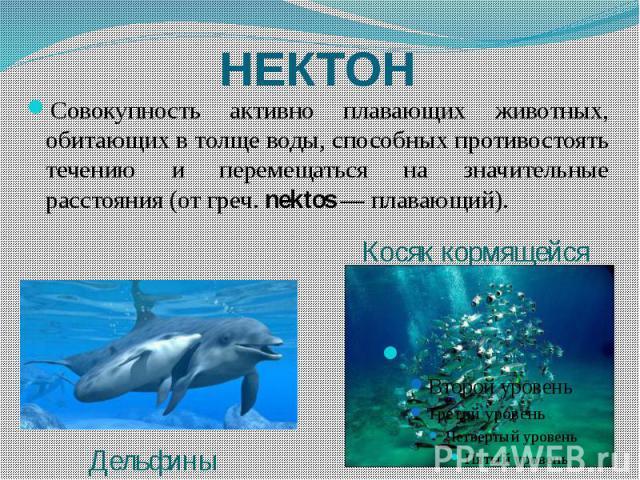НЕКТОН Совокупность активно плавающих животных, обитающих в толще воды, способных противостоять течению и перемещаться на значительные расстояния (от греч. nektos — плавающий).
