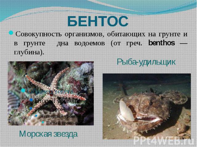 БЕНТОС Совокупность организмов, обитающих на грунте и в грунте дна водоемов (от греч. benthos — глубина).