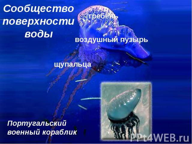 Сообщество поверхности воды
