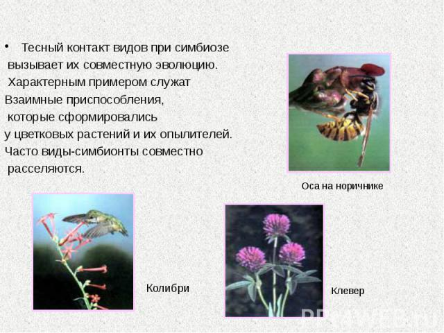 Тесный контакт видов при симбиозе Тесный контакт видов при симбиозе вызывает их совместную эволюцию. Характерным примером служат Взаимные приспособления, которые сформировались у цветковых растений и их опылителей. Часто виды-симбионты совместно рас…