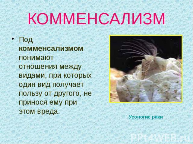 КОММЕНСАЛИЗМ Под комменсализмом понимают отношения между видами, при которых один вид получает пользу от другого, не принося ему при этом вреда.