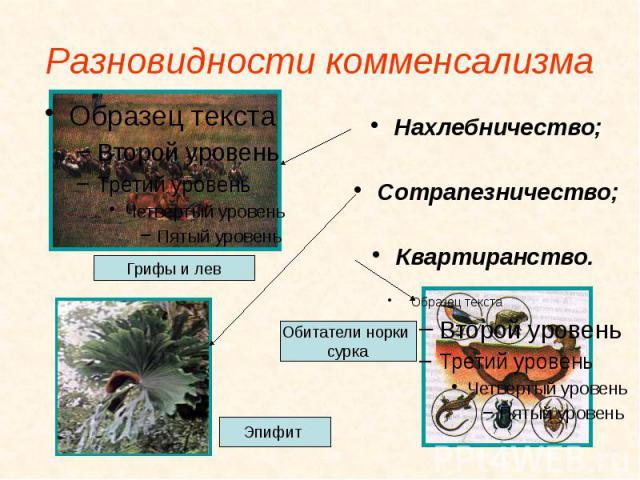 Разновидности комменсализма Нахлебничество; Сотрапезничество; Квартиранство.