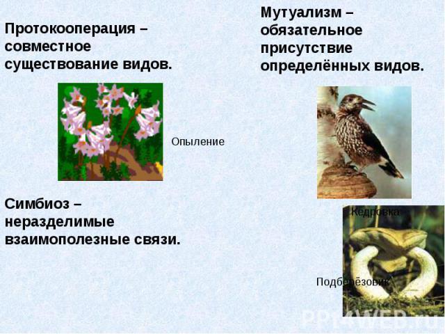 Протокооперация – совместное существование видов. Протокооперация – совместное существование видов.