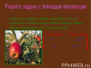 2.Из 30 кг свежих яблок выходит 10,5 кг сушеных. Сколько надо взять свежих яблок