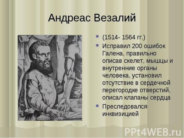 (1514- 1564 гг.) (1514- 1564 гг.) Исправил 200 ошибок Галена, правильно описав скелет, мышцы и внутренние органы человека, установил отсутствие в сердечной перегородке отверстий, описал клапаны сердца Преследовался инквизицией