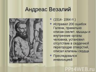 (1514- 1564 гг.) (1514- 1564 гг.) Исправил 200 ошибок Галена, правильно описав с