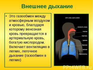 Это газообмен между атмосферным воздухом и кровью, благодаря которому венозная к