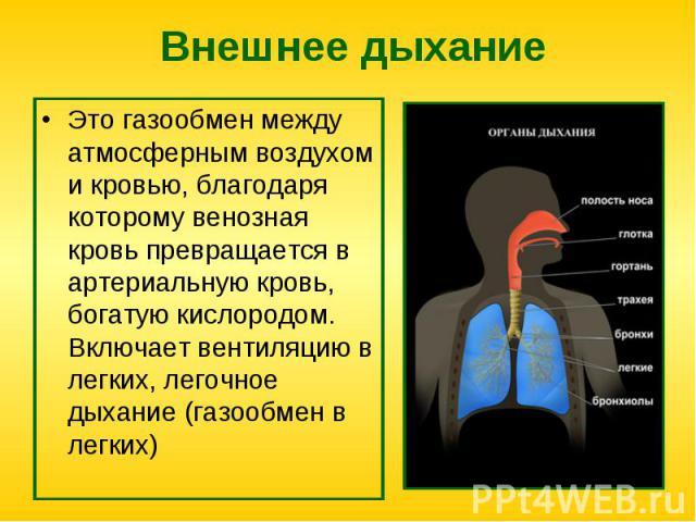 Это газообмен между атмосферным воздухом и кровью, благодаря которому венозная кровь превращается в артериальную кровь, богатую кислородом. Включает вентиляцию в легких, легочное дыхание (газообмен в легких) Это газообмен между атмосферным воздухом …
