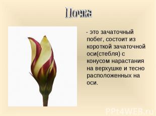 - это зачаточный побег, состоит из короткой зачаточной оси(стебля) с конусом нар