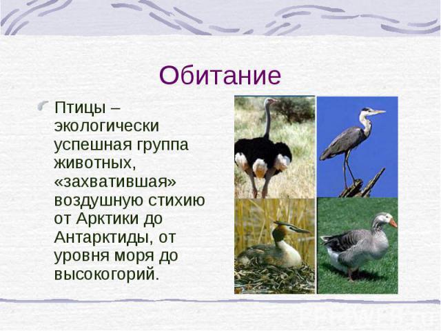 Птицы – экологически успешная группа животных, «захватившая» воздушную стихию от Арктики до Антарктиды, от уровня моря до высокогорий. Птицы – экологически успешная группа животных, «захватившая» воздушную стихию от Арктики до Антарктиды, от уровня …