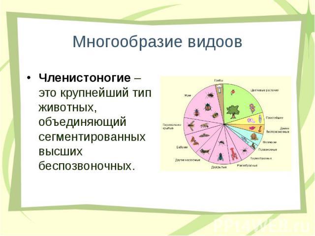 Членистоногие – это крупнейший тип животных, объединяющий сегментированных высших беспозвоночных. Членистоногие – это крупнейший тип животных, объединяющий сегментированных высших беспозвоночных.