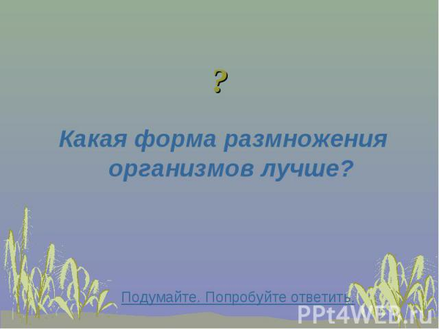 Какая форма размножения организмов лучше? Какая форма размножения организмов лучше?