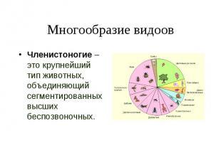 Членистоногие – это крупнейший тип животных, объединяющий сегментированных высши