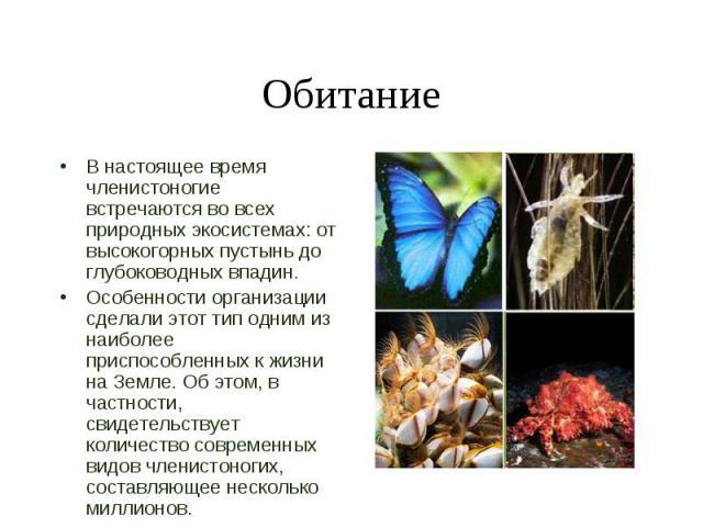 В настоящее время членистоногие встречаются во всех природных экосистемах: от высокогорных пустынь до глубоководных впадин. В настоящее время членистоногие встречаются во всех природных экосистемах: от высокогорных пустынь до глубоководных впадин. О…
