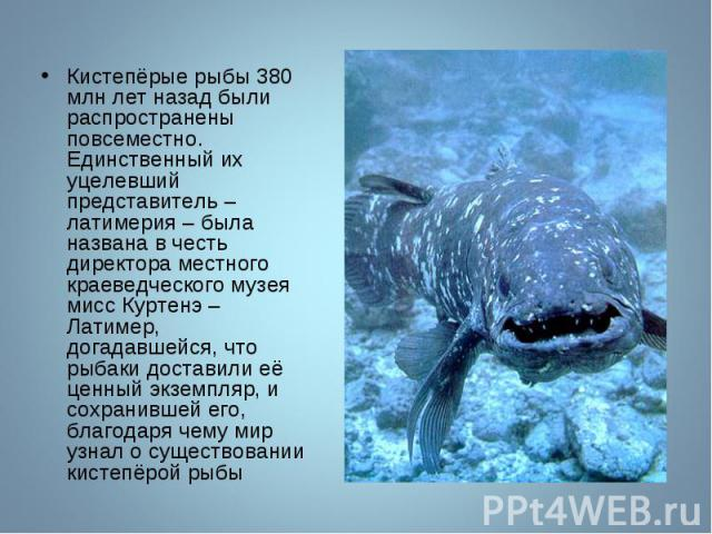 Кистепёрые рыбы 380 млн лет назад были распространены повсеместно. Единственный их уцелевший представитель – латимерия – была названа в честь директора местного краеведческого музея мисс Куртенэ – Латимер, догадавшейся, что рыбаки доставили её ценны…