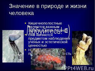 Кишечнополостные являются важным звеном в цепи питания Кишечнополостные являются