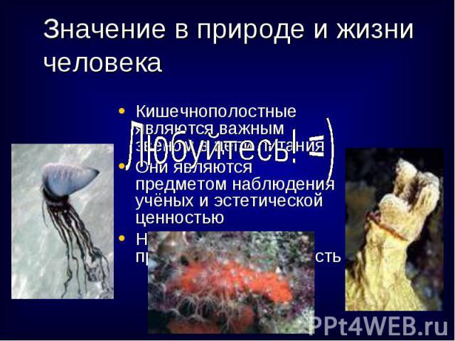 Кишечнополостные являются важным звеном в цепи питания Кишечнополостные являются важным звеном в цепи питания Они являются предметом наблюдения учёных и эстетической ценностью Некоторые виды представляют опасность