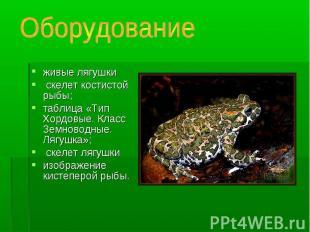 живые лягушки живые лягушки скелет костистой рыбы; таблица «Тип Хордовые. Класс