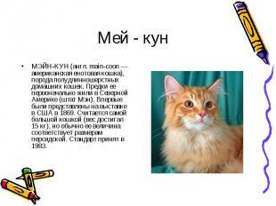 МЭЙН-КУН (англ. main-coon — американская енотовая кошка), порода полудлинношерст