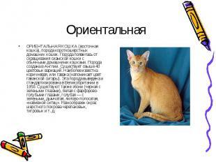 ОРИЕНТАЛЬНАЯ КОШКА (восточная кошка), порода короткошерстных домашних кошек. Пор