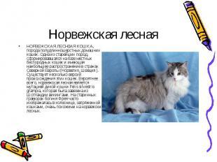 НОРВЕЖСКАЯ ЛЕСН АЯ КОШКА, порода полудлинношерстных домашних кошек. Одна из стар