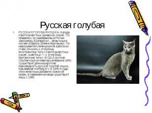 РУССКАЯ ГОЛУБАЯ КОШКА, порода короткошерстных домашних кошек. По преданию, их ра