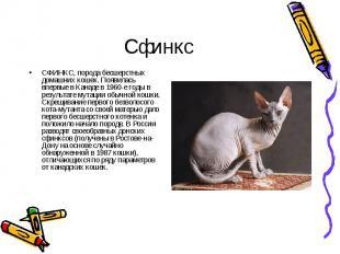 СФИНКС, порода бесшерстных домашних кошек. Появилась впервые в Канаде в 1960-е г