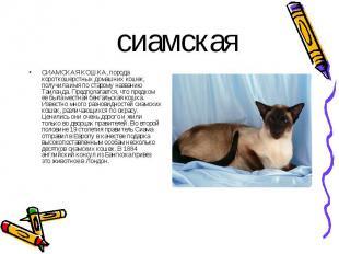 СИАМСКАЯ КОШКА, порода короткошерстных домашних кошек, получила имя по старому н