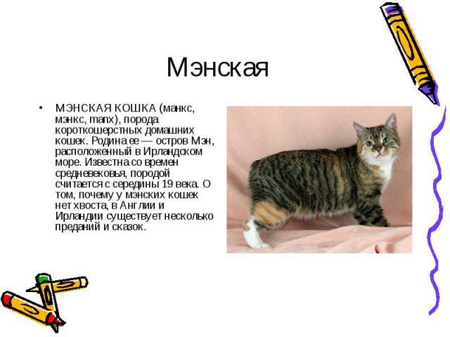 МЭНСКАЯ КОШКА (манкс, мэнкс, manx), порода короткошерстных домашних кошек. Родина ее — остров Мэн, расположенный в Ирландском море. Известна со времен средневековья, породой считается с середины 19 века. О том, почему у мэнских кошек нет хвоста, в А…