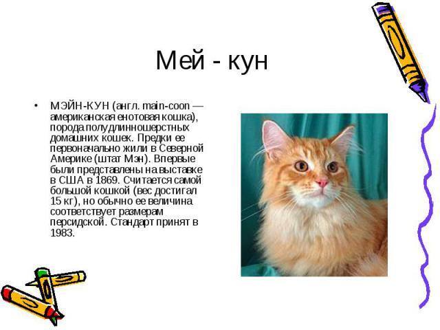 МЭЙН-КУН (англ. main-coon — американская енотовая кошка), порода полудлинношерстных домашних кошек. Предки ее первоначально жили в Северной Америке (штат Мэн). Впервые были представлены на выставке в США в 1869. Считается самой большой кошкой (вес д…