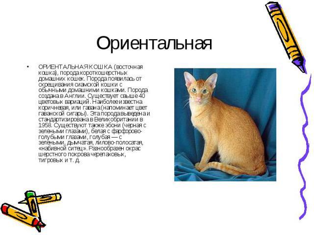 ОРИЕНТАЛЬНАЯ КОШКА (восточная кошка), порода короткошерстных домашних кошек. Порода появилась от скрещивания сиамской кошки с обычными домашними кошками. Порода создана в Англии. Существует свыше 40 цветовых вариаций. Наиболее известна коричневая, и…