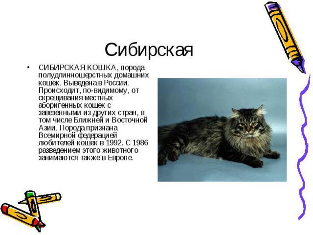 СИБИРСКАЯ КОШКА, порода полудлинношерстных домашних кошек. Выведена в России. Происходит, по-видимому, от скрещивания местных аборигенных кошек с завезенными из других стран, в том числе Ближней и Восточной Азии. Порода признана Всемирной федерацией…