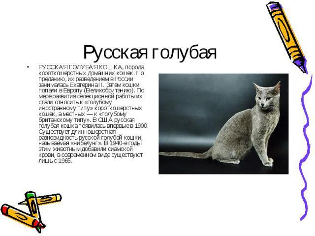РУССКАЯ ГОЛУБАЯ КОШКА, порода короткошерстных домашних кошек. По преданию, их разведением в России занималась Екатерина II. Затем кошки попали в Европу (Великобританию). По мере развития селекционной работы их стали относить к «голубому иностранному…