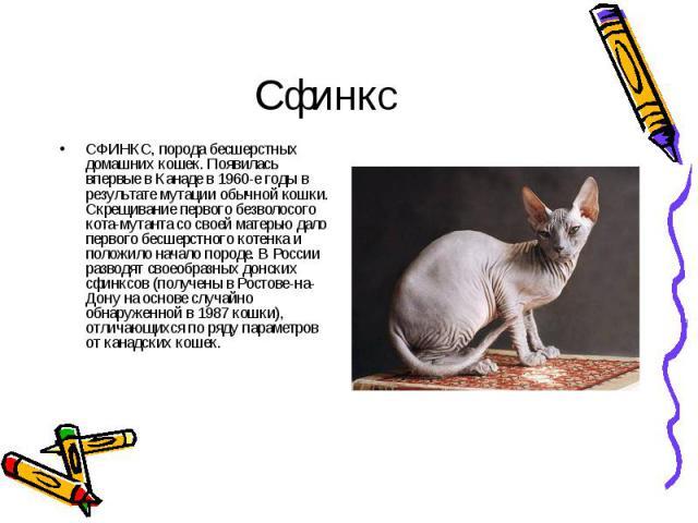 СФИНКС, порода бесшерстных домашних кошек. Появилась впервые в Канаде в 1960-е годы в результате мутации обычной кошки. Скрещивание первого безволосого кота-мутанта со своей матерью дало первого бесшерстного котенка и положило начало породе. В Росси…