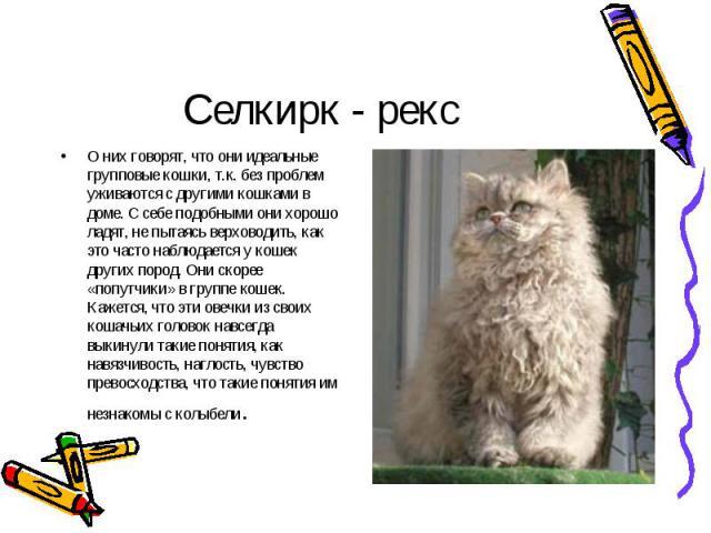 О них говорят, что они идеальные групповые кошки, т.к. без проблем уживаются с другими кошками в доме. С себе подобными они хорошо ладят, не пытаясь верховодить, как это часто наблюдается у кошек других пород. Они скорее «попутчики» в группе кошек. …