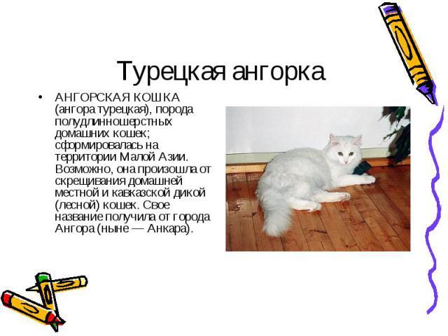 АНГОРСКАЯ КОШКА (ангора турецкая), порода полудлинношерстных домашних кошек; сформировалась на территории Малой Азии. Возможно, она произошла от скрещивания домашней местной и кавказской дикой (лесной) кошек. Свое название получила от города Ангора …